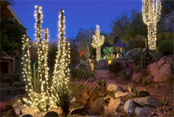 Christmas cactus | Pin Xmas