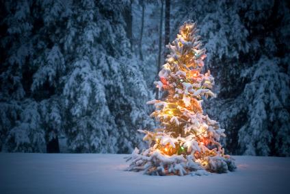 christmas crazy duran christmas tree in the snow - Colorado Christmas
