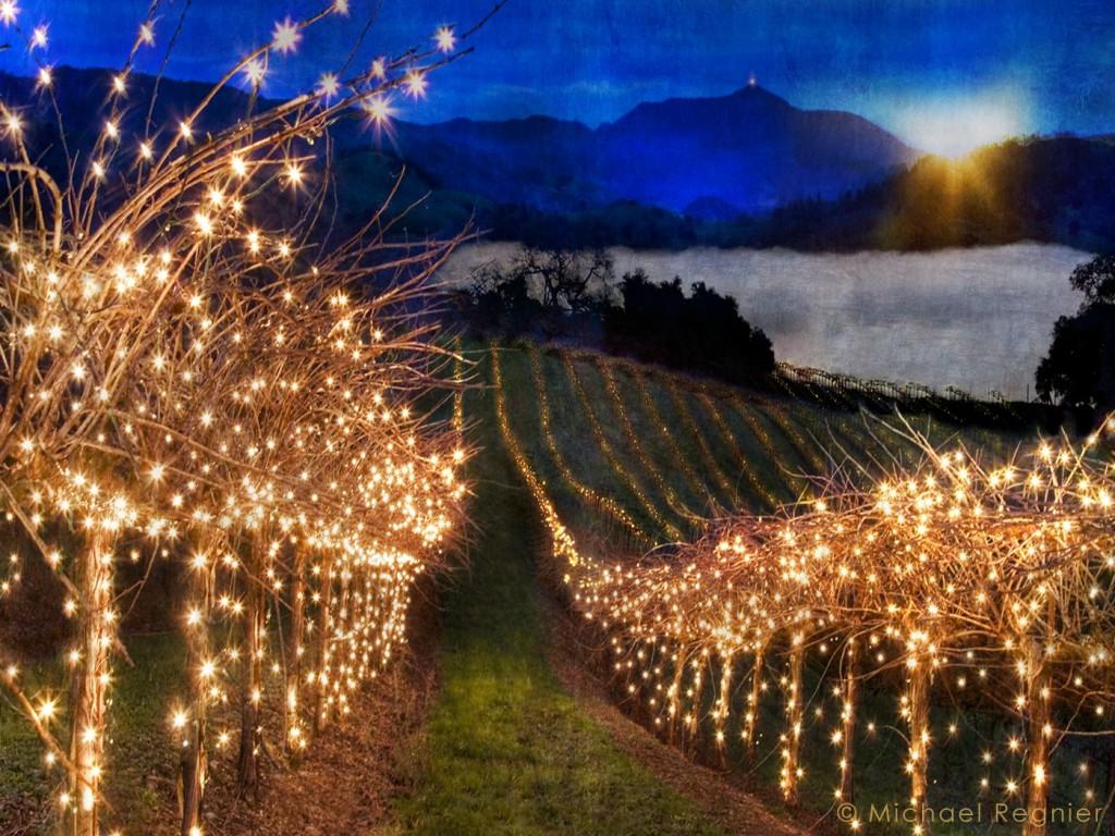 Christmas lights California vineyard style Immure