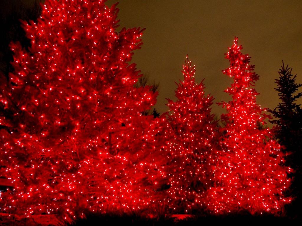 Professional Christmas Lighting Installation Shingle
