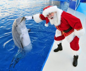 Santa sea world 45