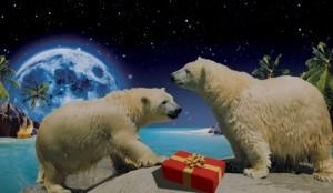 Sea World at Christmas