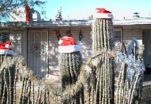 Tucson christmas 3
