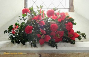 Christmas Flowers in Church