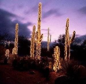 Xmas saguaro